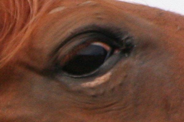 zwarte vlekjes in je oog